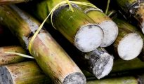 8% to 243 Lakh Tonne Sugar Production Decline