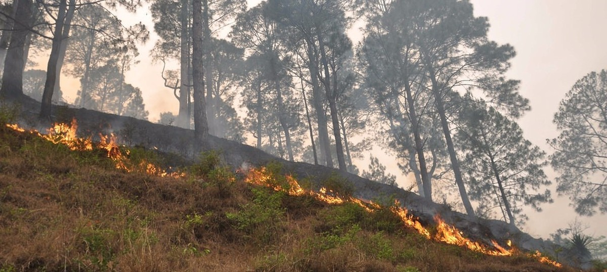 Wildfire Engulfs forests in J&K after Uttarakhand and Himachal