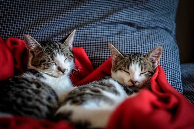 Family Pets: Important Considerations