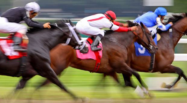 things to do in canada - horse racing game betting in canada