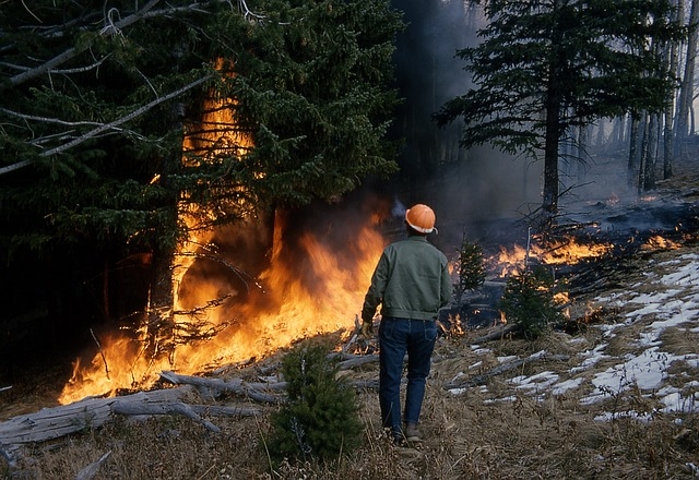 The Best Safety Tips For Surviving Wildfires